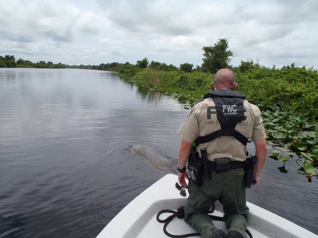 Ces manatee rescued on the kissimmee river july 2012 for Florida fish and wildlife officer